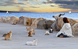 Theirs strangest world. The shot was taken on the northern beach of Eilat city, Israel Stock Photo