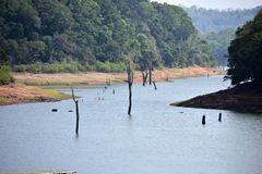 Thekkady湖在贝里亚尔河国立公园的划船视图 库存照片