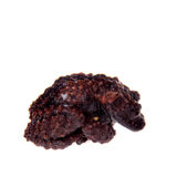 Theloderma gordoni, rare spieces of frog on white Stock Images