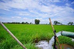 Thema ist undeutlicher Offen-berechneter Storch, asiatisches openbill ist Hilfsschädlingsbekämpfungsmittel in Thailand Lizenzfreie Stockbilder
