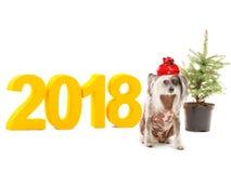 Thema van het Nieuwjaar De inschrijving 2018 waardichtbij een kleine hond zit en zich decoratieve Kerstboom bevindt Geïsoleerde Stock Afbeeldingen
