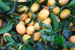 Themaprang. Marian plum is a fruit in Asia Stock Photos