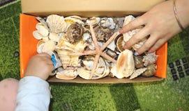 Thematisch beroep in de kleuterschool op het thema van het overzees Overzeese shells en schaaldieren in een close-updoos stock foto
