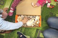 Thematische Besetzung im Kindergarten auf dem Thema des Meeres Seeoberteile und -schalentiere in einem Nahaufnahmekasten lizenzfreie stockfotografie