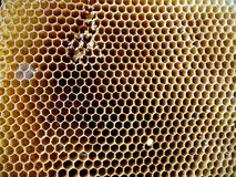 The theme apiary Stock Photos