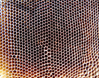 The theme bees. The photo shows beehive, honey nectar, hive swarm winged bee honeycomb wax private apiary, beekeeper beeswax Royalty Free Stock Image