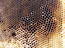 The theme bees. The photo shows beehive, honey nectar, hive swarm winged bee honeycomb wax private apiary, beekeeper beeswax Royalty Free Stock Photos