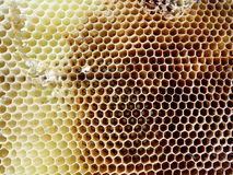 The theme bees. The photo shows beehive, honey nectar, hive swarm winged bee honeycomb wax private apiary, beekeeper beeswax Stock Photography
