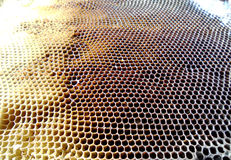 The theme bees. The photo shows beehive, honey nectar, hive swarm winged bee honeycomb wax private apiary, beekeeper beeswax Stock Image