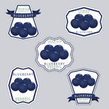 The theme blueberry vector illustration