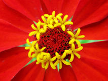 The theme flower. The photo shows colored flower, green leaf of natural nature stock photo