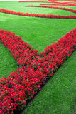 Theme Green. A flower bed with red flowers and green lawn (vertical royalty free stock image