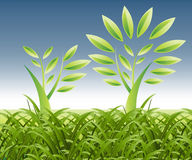 Theme of growth. Plant Growth Background, theme of growth Stock Photos