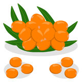 The theme sea buckthorn Stock Images