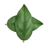 Themed cross icon of nature preservation. Themed icon of nature preservation royalty free stock photography