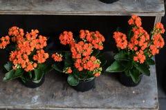 Themenorientierte Blumen der Fallfeiertage Stockfotografie