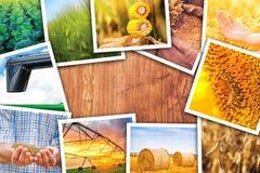 Themenorientierte Collage der Landwirtschaft von Fotos Stockfotos