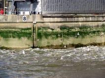 Themsenflodbarriär Arkivbild