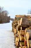 Then. Stumps of cut trees in winter Stock Photos