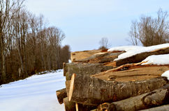 Then. Stumps of cut trees in winter Stock Images