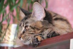 Theodora, die Katze Stockfoto