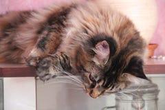 Theodora katten Fotografering för Bildbyråer
