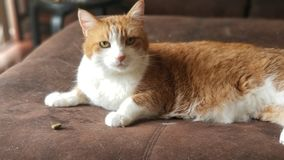 Theodore. The cat stock photography