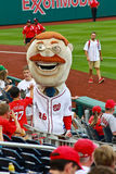 Theodore Roosevelt mascot (Nationals MLB). Washington Nationals mascot Teddy Roosevelt rallies the fans prior to the start of a game Stock Photography