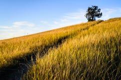 Theodore Roosevelt National Park, royaltyfria bilder