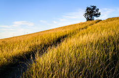 Theodore Roosevelt National Park, Royalty Free Stock Images
