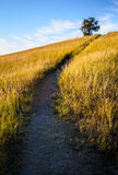 Theodore Roosevelt National Park,. Theodore Roosevelt National Park Trail up Meadow Hill Stock Photos