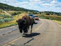 Theodore Rosevelt National Park stock foto's