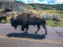 Theodore Rosevelt National Park arkivbilder