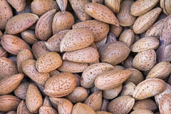 The pile of kernels of paddy bitter almonds Royalty Free Stock Image