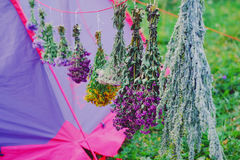 Therapeutic plants dry Royalty Free Stock Image