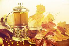 Therapeutischer Tee von den Saisonsanddornbeeren, zum von Immunität beizubehalten Stockfotos