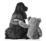 Therapy dog Royalty Free Stock Photos