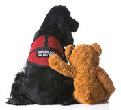 Therapy dog Stock Image