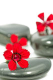 Therapy stones Stock Images