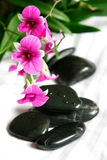 Therapy stones with miniature magenta orchids Royalty Free Stock Photo