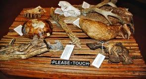 Saguaro national park arizona state usa artifacts stock image