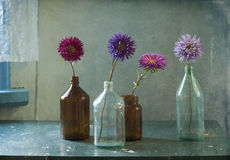 There are asters in-bottle. Still life with asters in-bottle Stock Photo