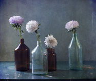 There are asters in-bottle. Still life with asters in-bottle Stock Photography