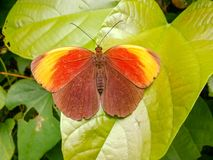 There is a beautiful butterfly on the leaves. The weather was fine and the outdoors was a walk Royalty Free Stock Image
