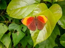 There is a beautiful butterfly on the leaves. The weather was fine and the outdoors was a walk Royalty Free Stock Photo