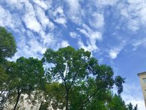 There are beautiful white clouds on the blue sky. There are beautiful white clouds on the blue sky, and the green leaves are really charming sky royalty free stock images