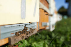 There are bees in the beehives Royalty Free Stock Image