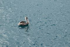 A bird on the water. There are a bird on water Stock Photos