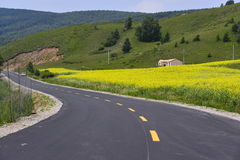 There canola flower bloom road Royalty Free Stock Photos