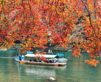 Arashiyama's autumn royalty free stock photography
